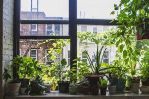 Como Fazer um Cantinho Verde em Apartamentos