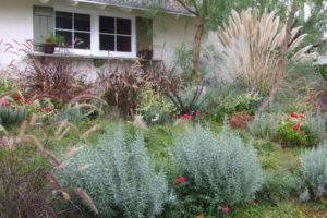 Um jardim com plantas resistentes à seca