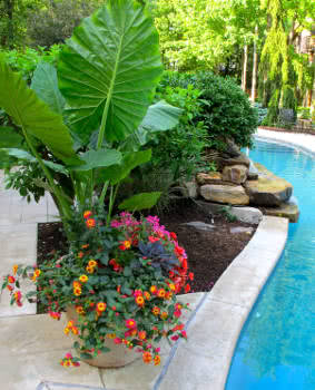 flores para beira de piscina