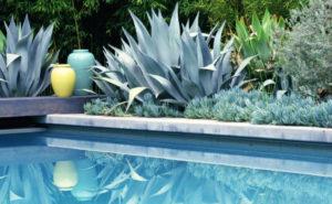 Plantas para a piscina baseadas em suculentas e cactáceas