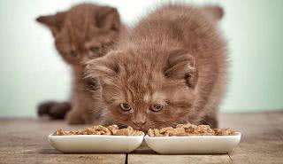 vantagens da ração úmida para gatos