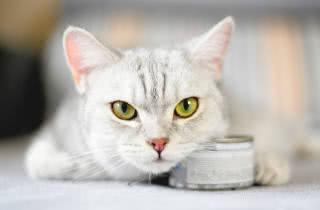 classificação das rações para gatos