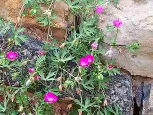 Flores em muros de pedra