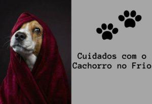Cuidados com o Cachorro no Frio