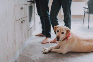Como Limpar Pelos de Cães e Gatos na Casa