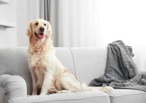 como limpar pelos dos cachorros e gatos