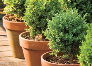 Plantas e folhagens para vasos grandes