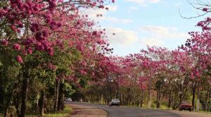 Árvores para estradas no paisagismo urbano
