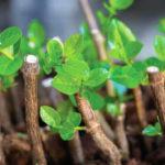Como enraizar plantas e os diferentes enraizadores