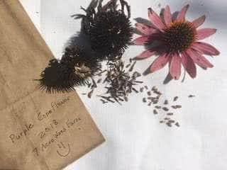coleta de sementes de flores