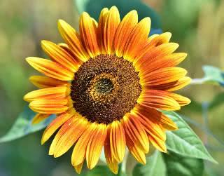 como colher semente de flores