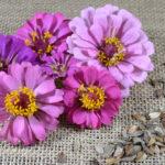 Como colher sementes de flores