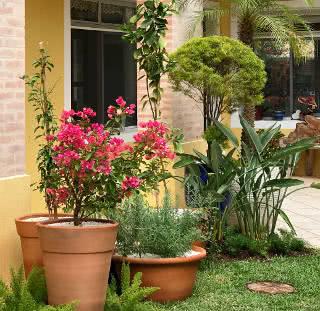 azaleia floresce no inverno