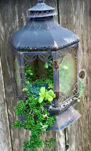 lanterna antiga para plantas