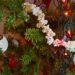 Enfeites Feitos de Comida para Decorar o Natal: Econômicos